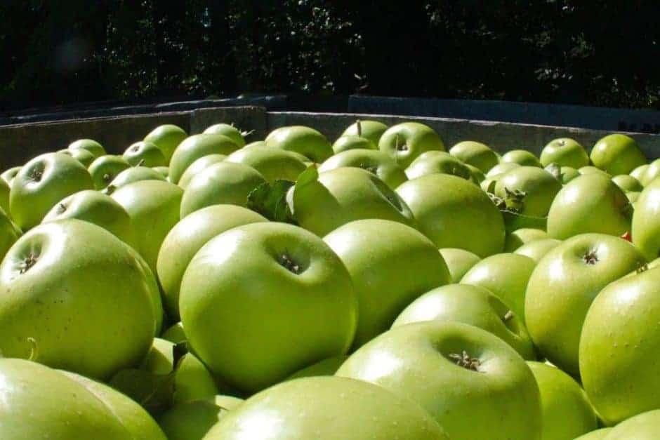 jacks-apples