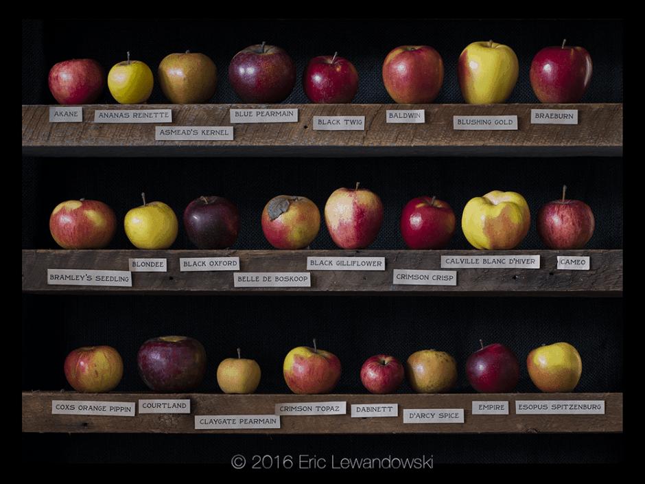 Apple Varieties