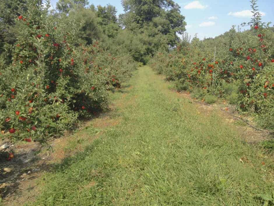 Frecon Farms Apple Orchard