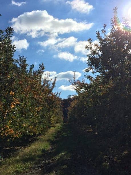 Penn State Cider Tour Orchard
