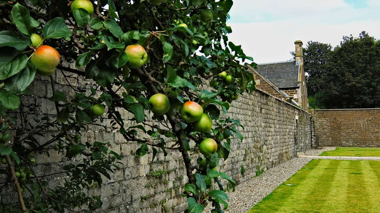 apple, wall