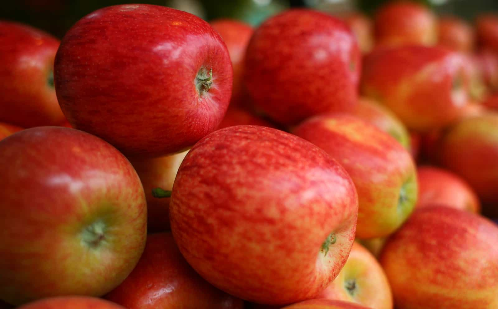 Cider & Perry Production—A Foundation | Cider Culture