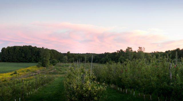 redbyrd orchard