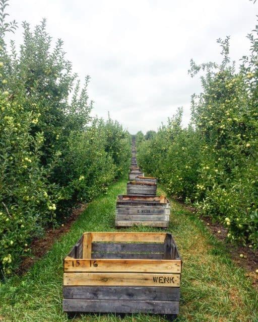 ploughman-farm-cider-orchard-ben-wenk