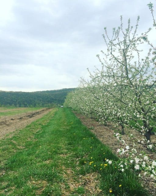 three-springs-fruit-farm
