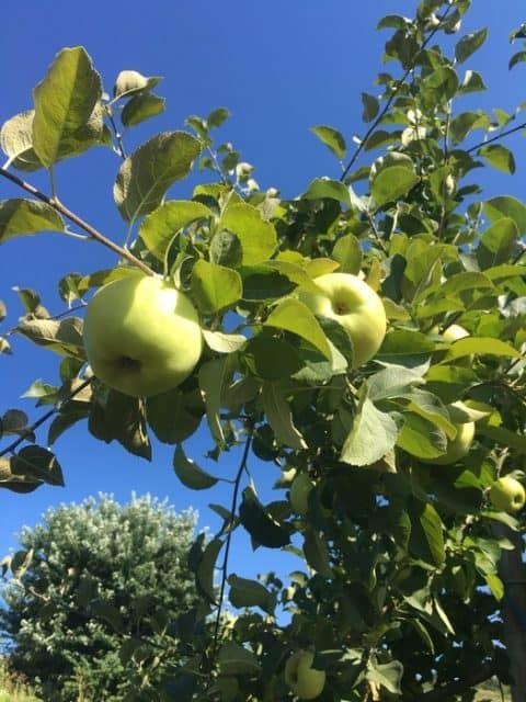 three-springs-fruit farm