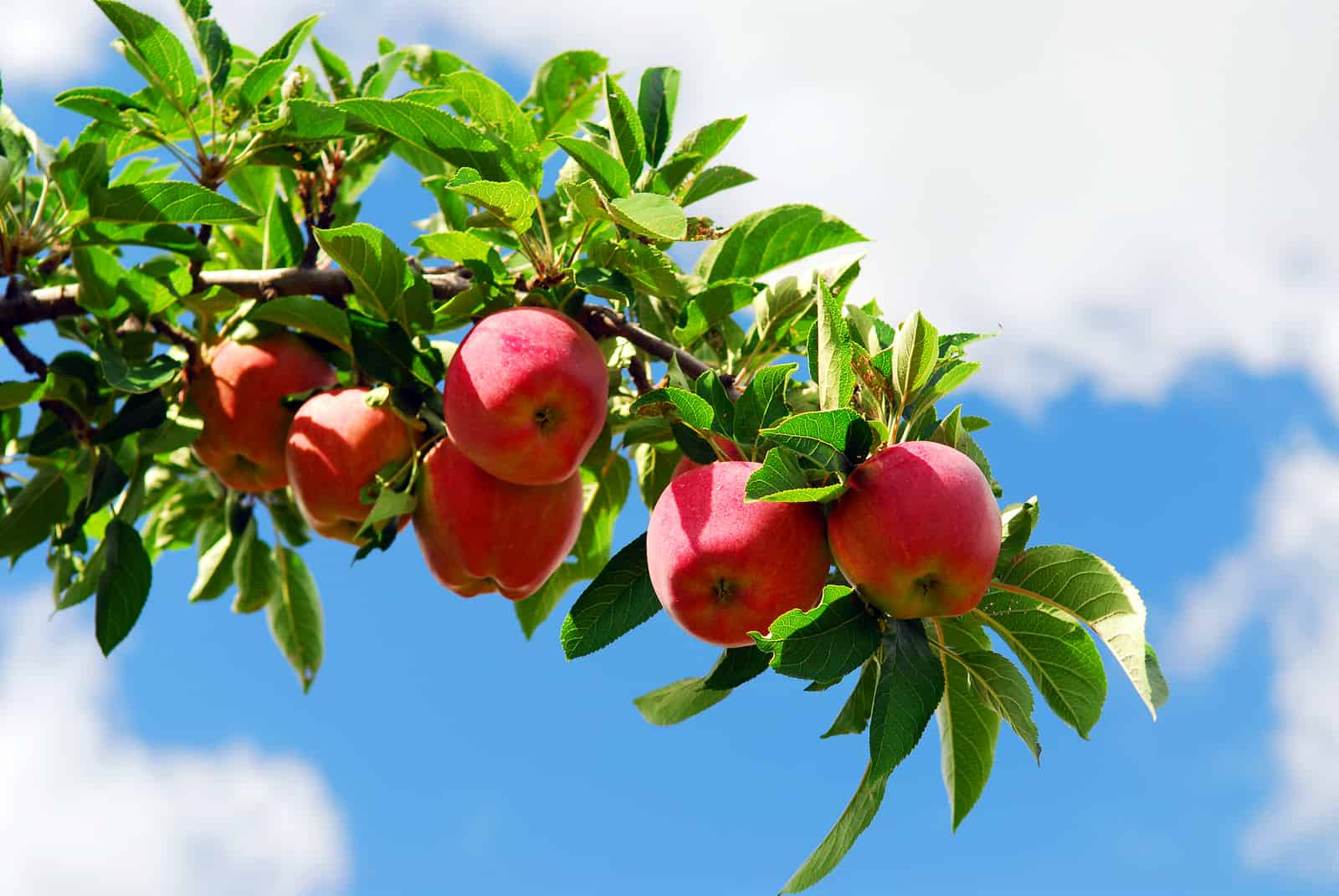 Gain UK Cider Market Insight from Westons Cider Report ...