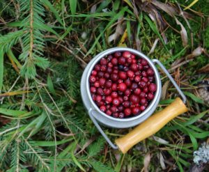 cranberry and cider sauce