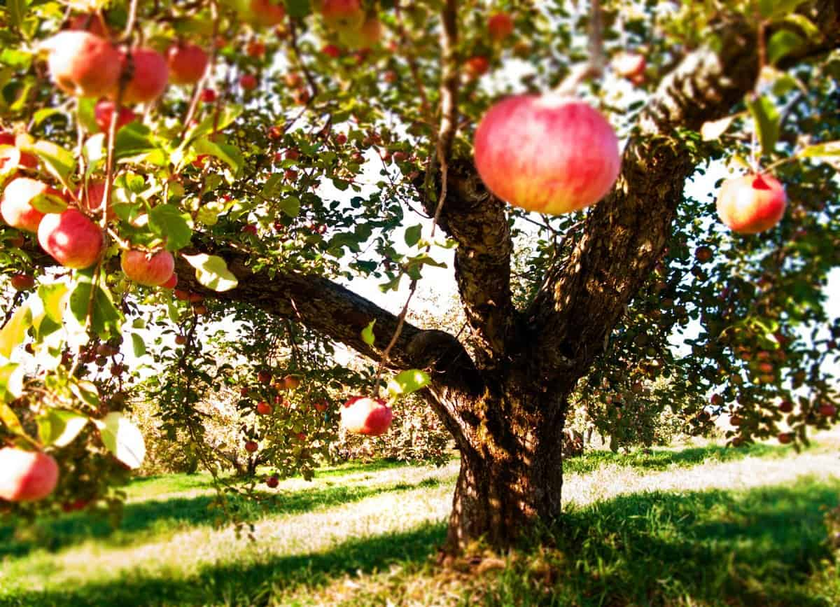 Cider Week Hudson Valley