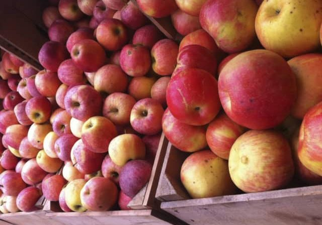 Credit: Amy Strauss  Tags: Apples, Cider